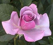 blueberryhill050531