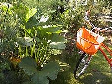 zucchini050712